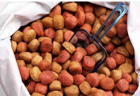 Comida para perros: la combinación óptima de sabor y comodidad